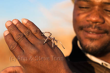 AC91 Willem Mutenga with white lady dancing spider