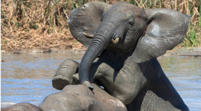 Elephant bath time caught on camera