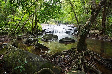 RCS84 Pang Sida waterfall, Pang Sida national park
