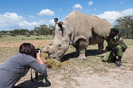 BPS15 Ann photographing northern white rhino, Ol Pejeta