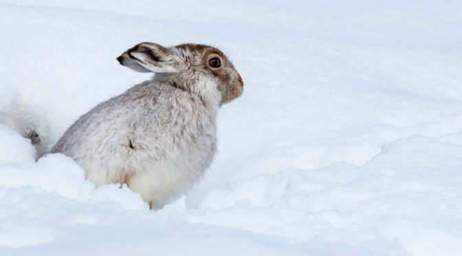 Hare it is – a fitting end to our photography in 2015