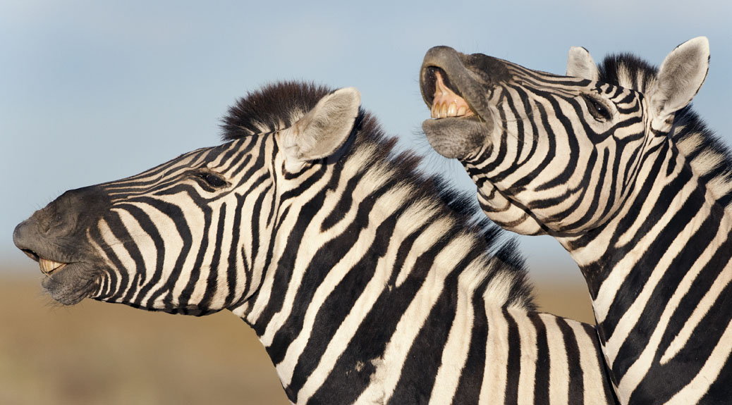 Our blog gets its stripes in African media awards
