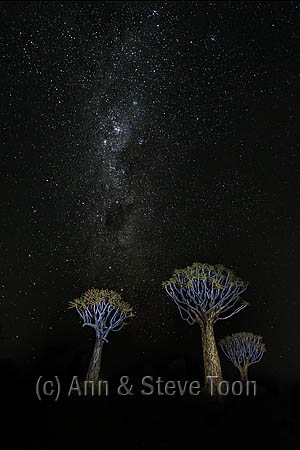 Quiver trees and Milky Way