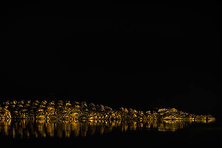 Nile crocodile at night